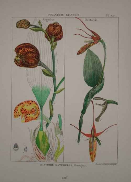 Lamarck Illustrations Botaniques